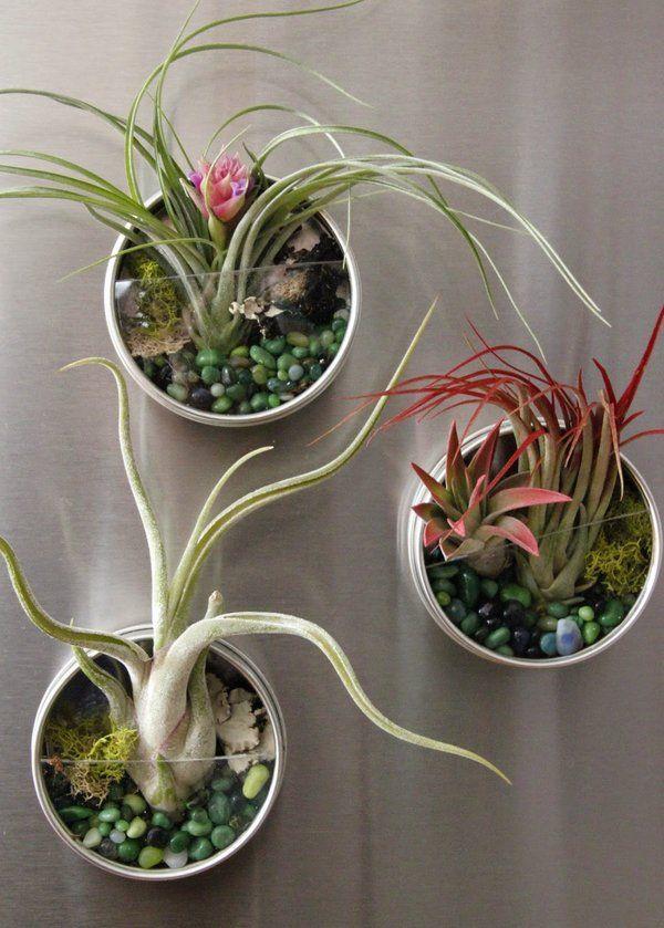 Air Plant Display Ideas Magnets Home Decoration Ideas Diy Garden