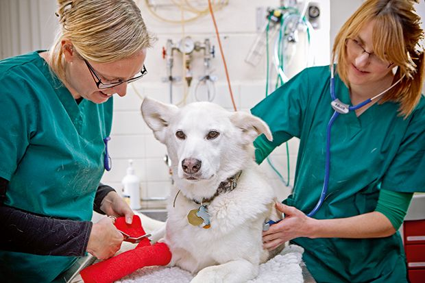 Veterinary Continuing Professional Development Veterinarians
