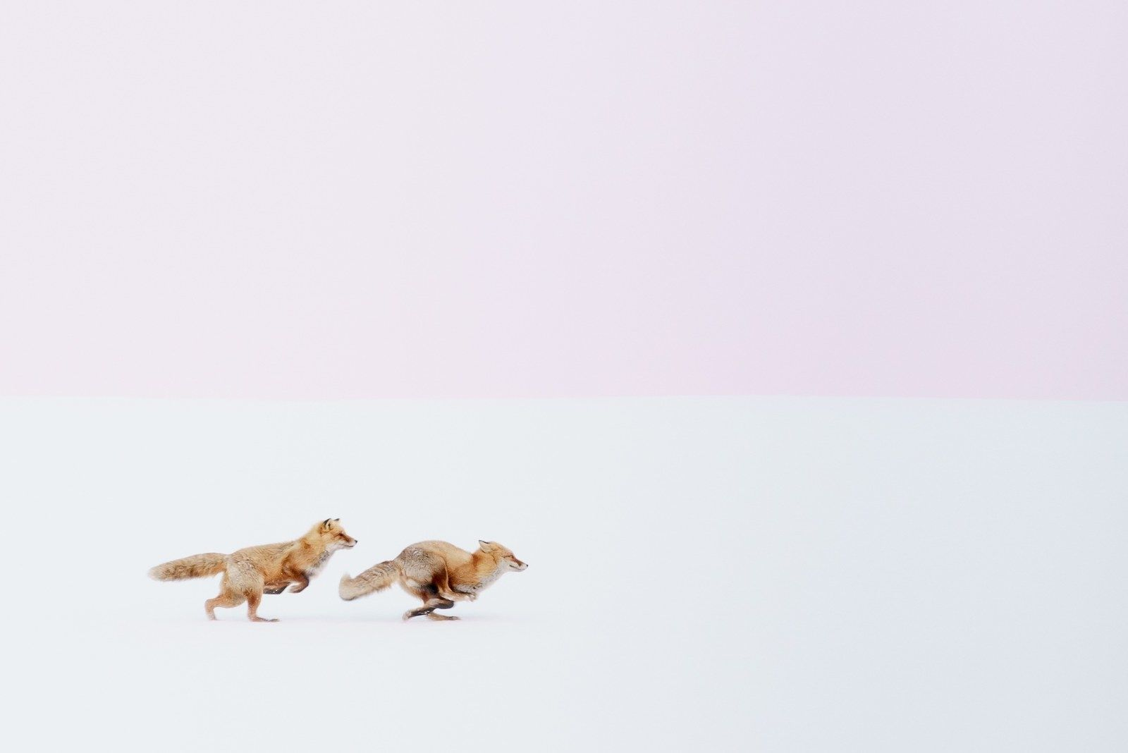 Photo of 12 Unique Pictures From The National Geographic Travel Photographer Of The Year Contest