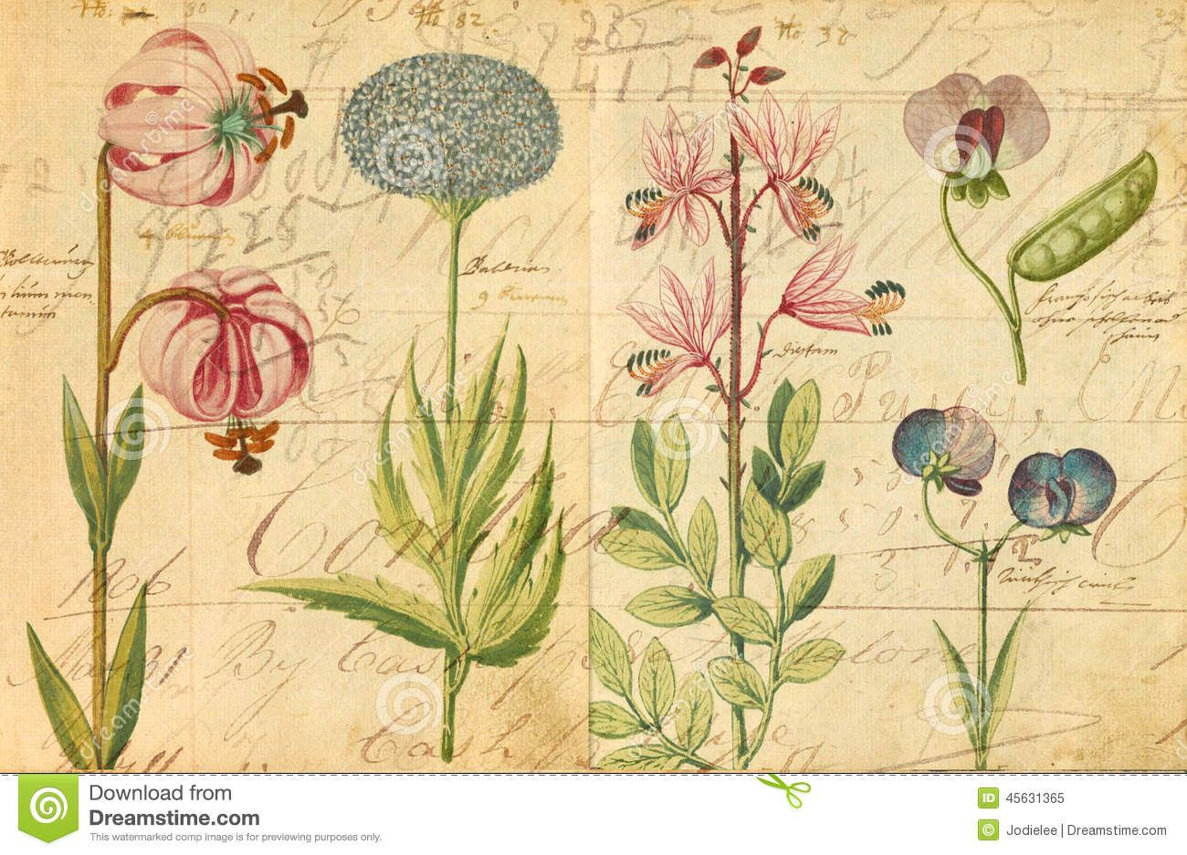 Antique Botanical Wall Art Print Illustration - Download From Over ...