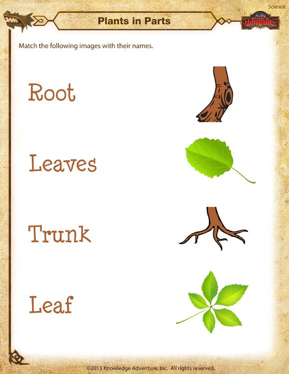 plant worksheets for kindergarten Google Search – Kindergarten Plant Worksheets