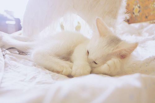 Angel Sleeping  (via Anna Shishkevich)