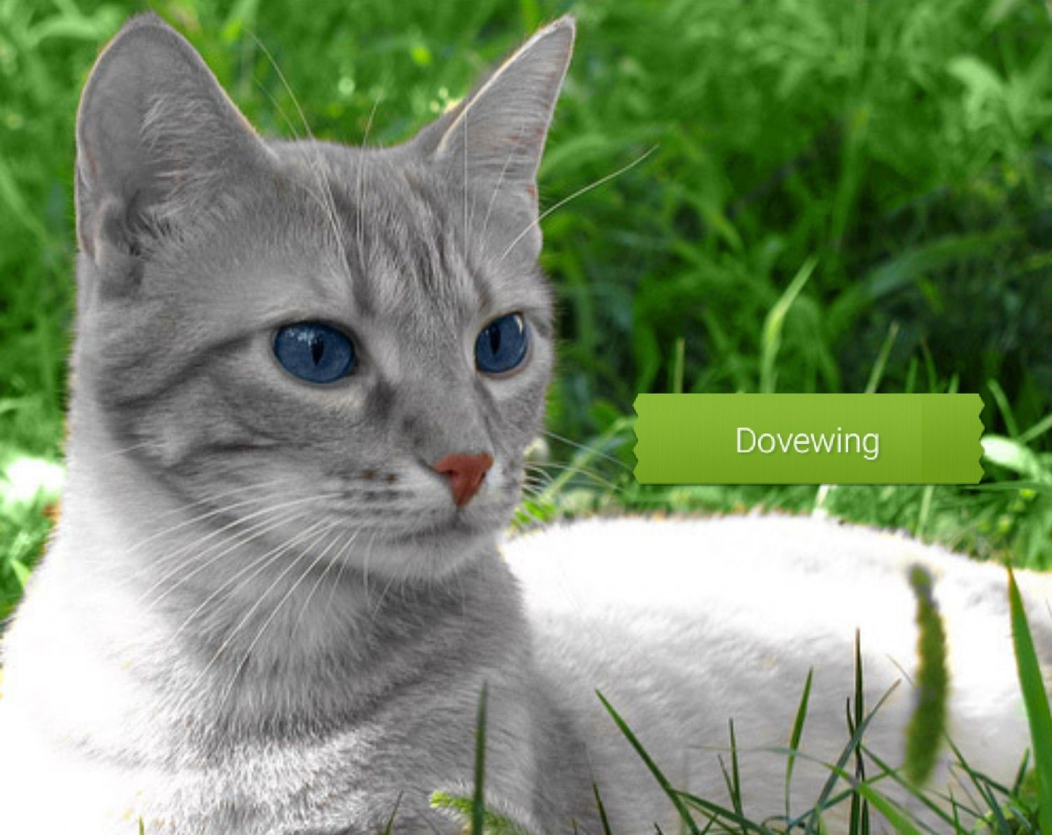 Dovewing With Images Grey Tabby Cats Tabby Cat Silver Tabby Cat