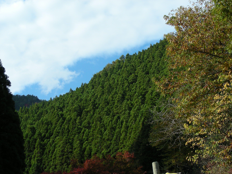 馬路村(Umajimura)_高知県