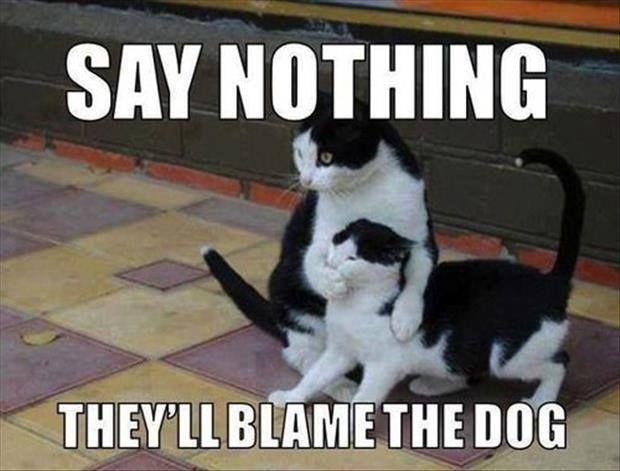39259778942d233c6e49af22d015feda cat meme climbs to the top of the corporate ladder needs,Get Down Cat Meme