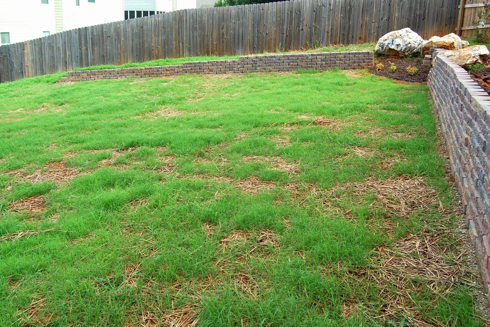 Laying Bermuda Grass Seed Retaining Wall Grading And Leveling Bermuda Grass Seed Bermuda Grass Grass Seed