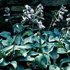 RHS Plant Selector Results / RHS Gardening