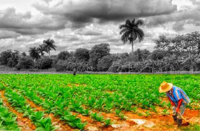 La tierra del Tabaco in #Viñales #Cuba #UNESCO