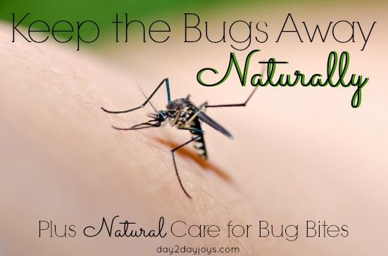 how to keep bugs away home remedies