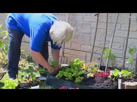 39265f7b9696b60ed59add22e793ecdd - How To Be A Gardener Bbc