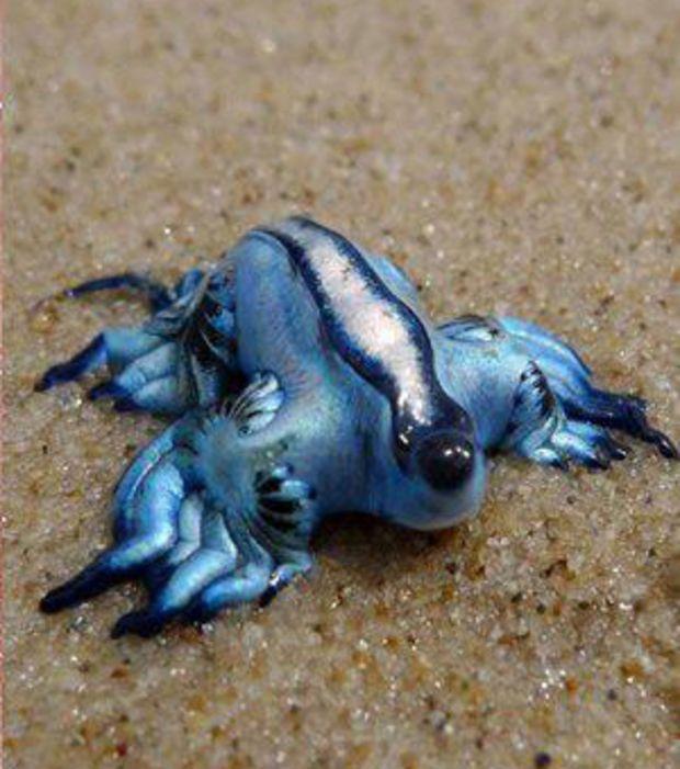 Dragon Bleu Animal découvrez 20 extraordinaires animaux bleus, une couleur rare dans le