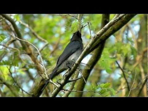 Images & videos of amazing wildlife of Sri Lanka