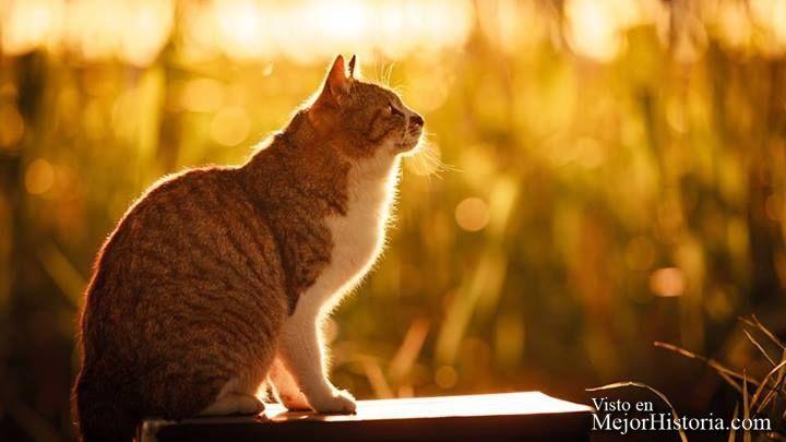 Los gatos sin duda son los reyes de internet, gobiernan las trending topic junto con los cachorritos, los bebes o los memes. No es de extrañar que nu... Ver mas: http://www.mejorhistoria.com/seiji-mamiya-fotos-gatos/