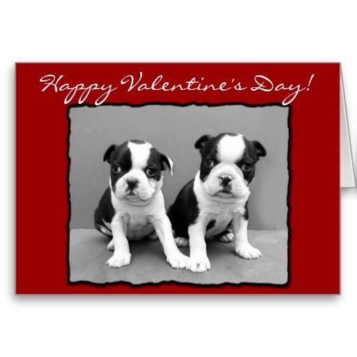 Happy Valentine S Day Boston Terrier Greeting Card Zazzle Com Happy Valentines Day Happy Valentine Holiday Design Card