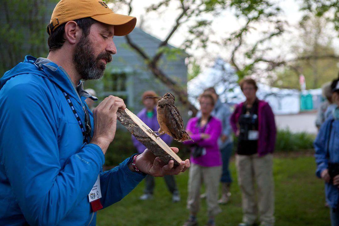Birdist Rule 94 Consider a Career in Birds Career