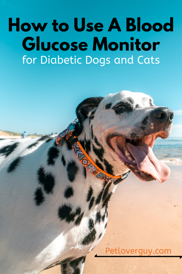 How to Use A Blood Glucose Monitor for Diabetic Dogs and