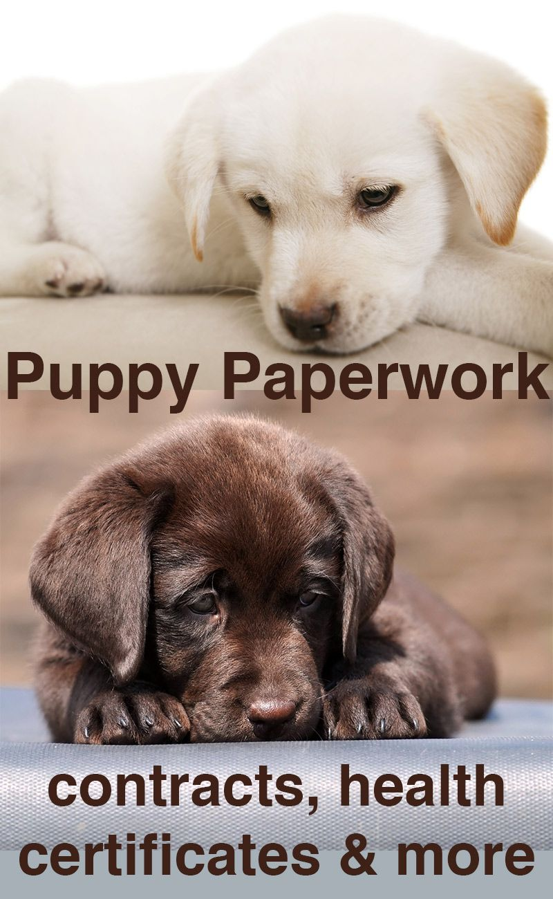 Puppy Paperwork Contracts Certificates Amp Microchipping