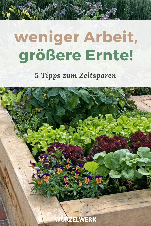 Keine Zeit Kein Problem 5 Tipps Fur Einen Pflegeleichten Gemusegarten Wurzelwerk Garten Gemusegarten Anlegen Nutzgarten Anlegen
