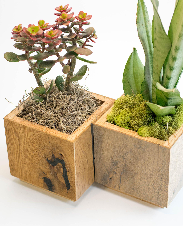 Modern planter indoor planter square planter cactus for Wooden cactus planter