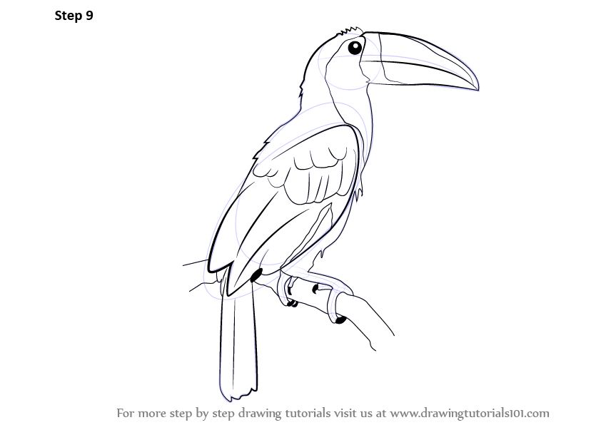 learn how to draw a toucan birds step by step drawing tutorials