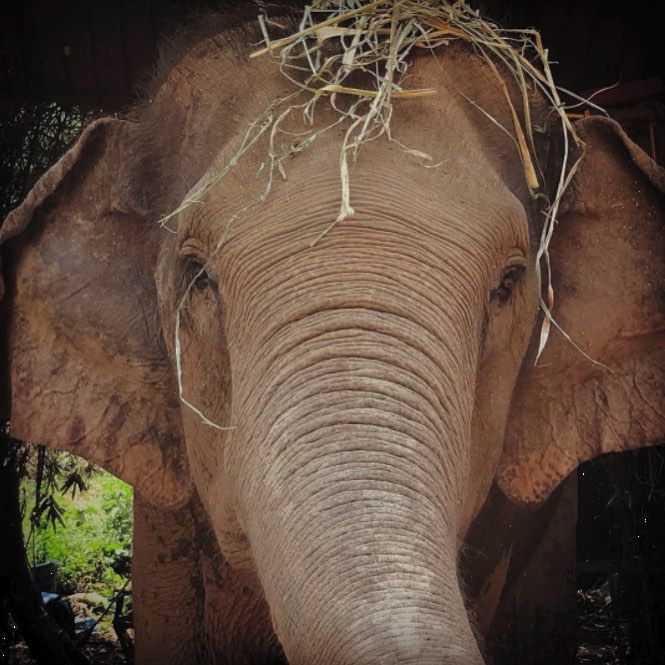 The Elephant Is One Of The Most Positive Animal Symbols And It Is