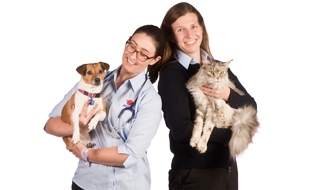 Jetpets Are Pleased To Offer A Complete Veterinary Service Export Accredited Veterinarians Are Based At Our Facilities In Melbou With Images Pet Travel Pet Transport Pets