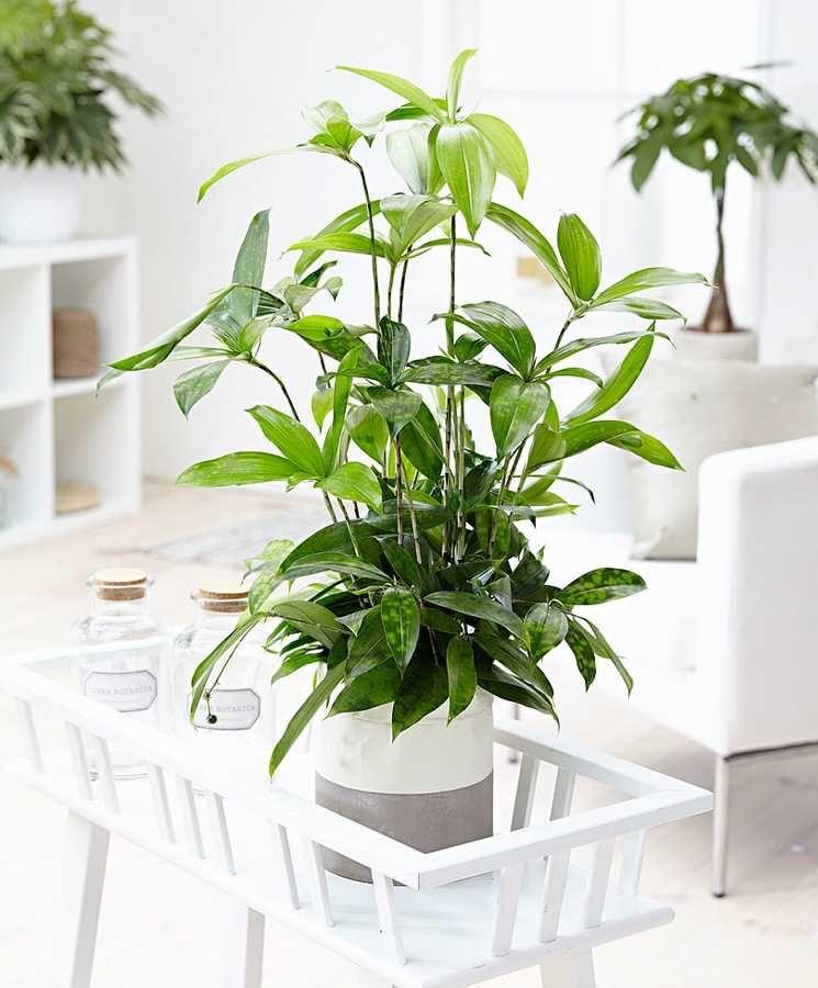 false | Low light house plants, Plants, Indoor plants