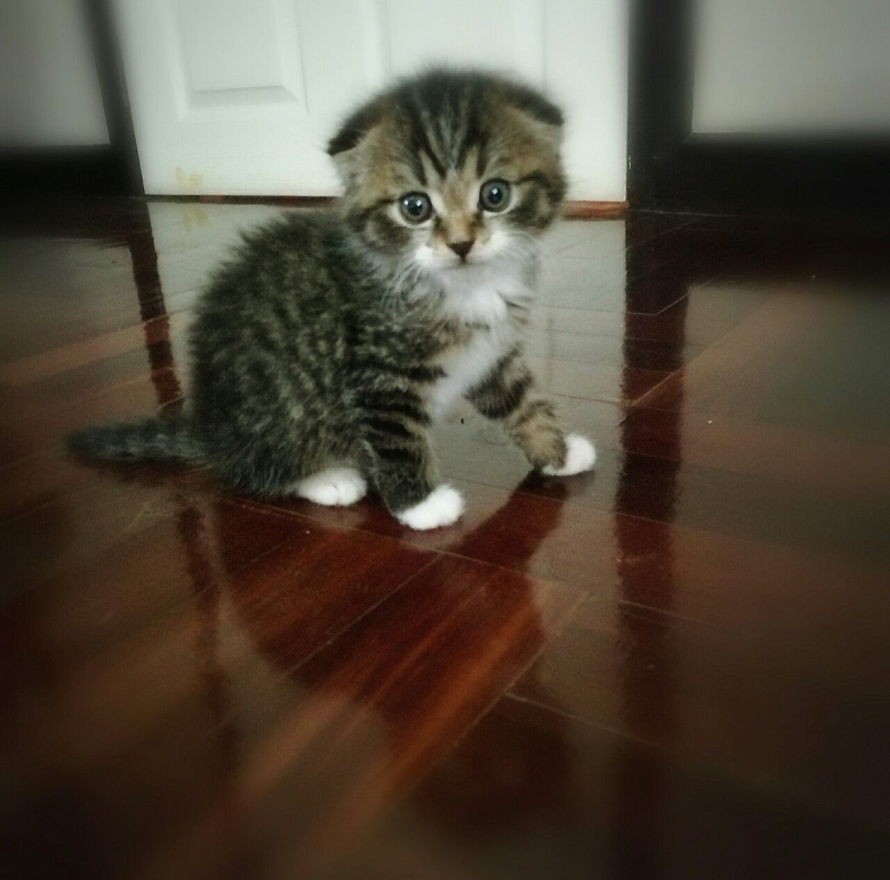 Nicky sweet kitty asian