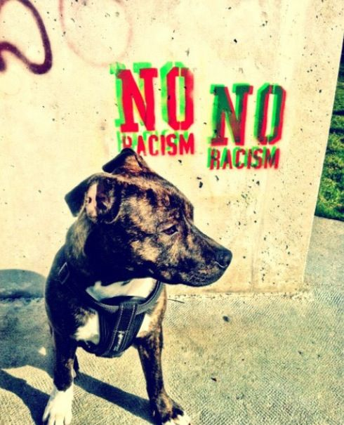 Strong message and puppy staffy Lille. No racism!