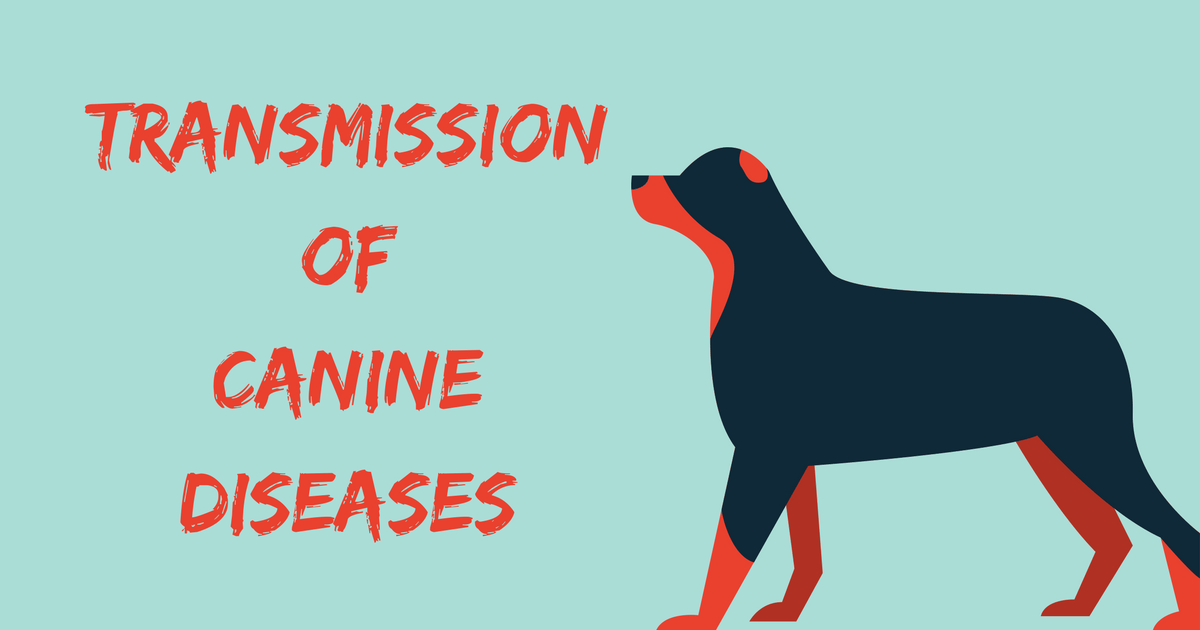 Transmission Of Canine Diseases I Love Veterinary Cats That Dont Shed Canine Cat Facts