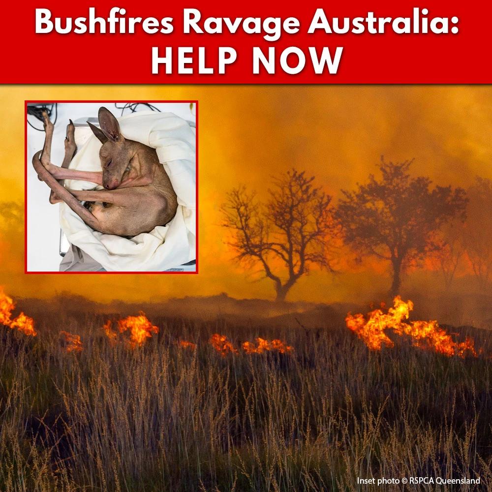 Bushfires Ravage Australia Help Now The Animal Rescue Site In 2020 Australia Animals Australia Animal Rescue Site