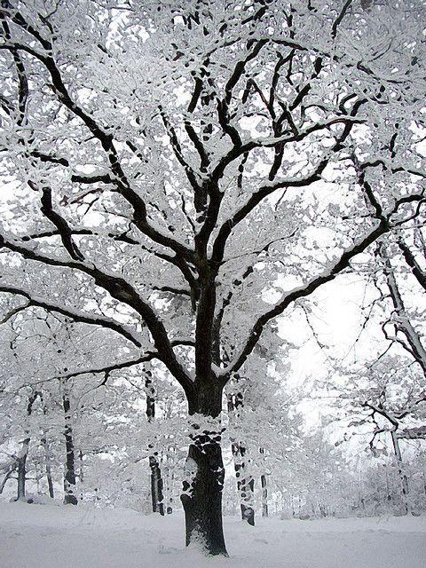 hoar frost @cheryl ng Nye