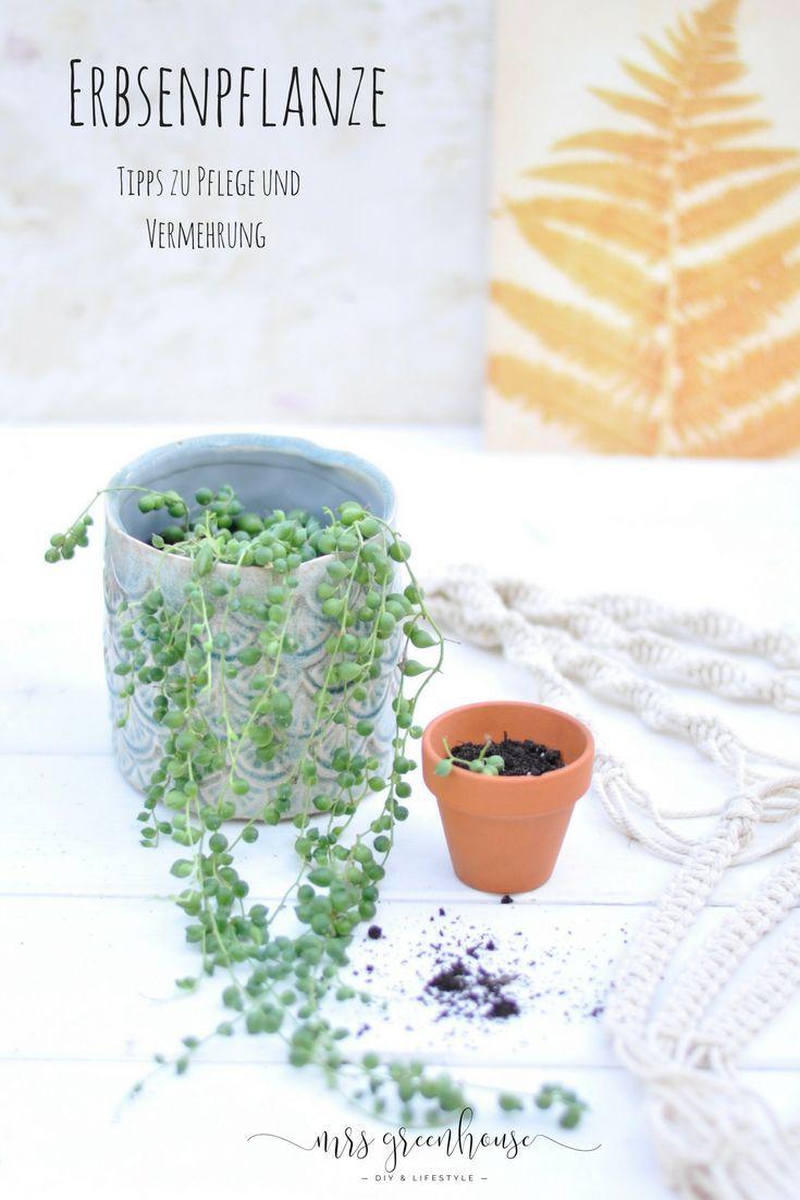 Photo of Tipps zur Pflege und Vermehrung der Erbsenpflanze