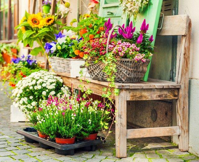 Fot Fotolia Com Plants Yard Garden