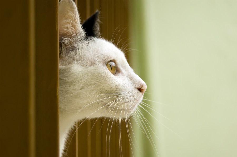 Cat in window by ronaldo ichi on 500px