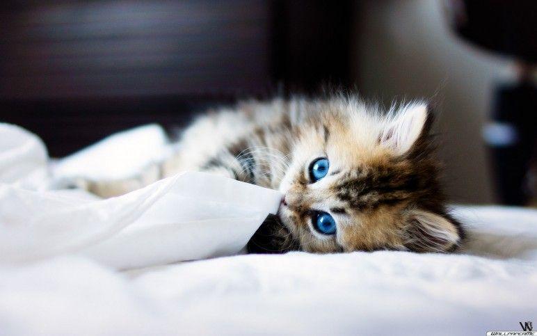 Que Olhinhos Fofos E Lindos Mit Bildern Katzen Bezaubernde Katzchen Baby Katzen