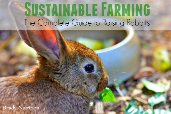 Sustainable Farming The Complete Guide to Raising Rabbits - Raising rabbits, Sustainable farming, Homesteading animals, Meat rabbits, Raising chickens, Raising rabbits for meat - Experienced rabbit breeder, Ruby Burks details how to begin sustainable farming measures by caring for rabbits  Her primer outlines what breed to choose, housing and feeding rabbits to use as meat sources
