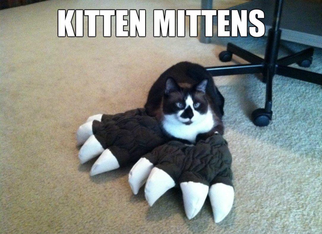 Cat scratch fever KITTENS Pinterest