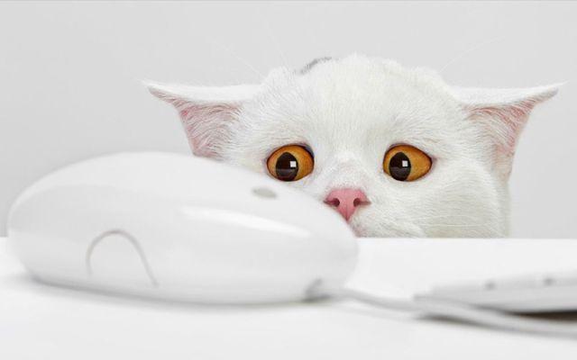 ∑:) ¿Por qué los gatos dominan internet?