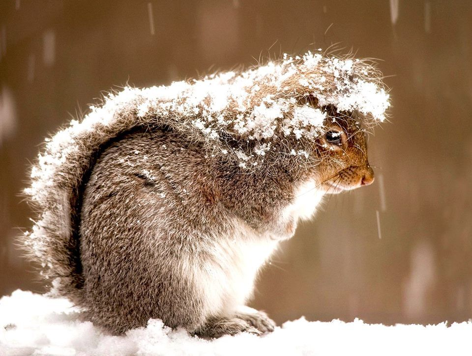 A tip from the fashion squirrels….TO the fashion squirrels
