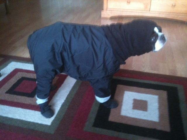 Dog snowsuit with boots attached herman tootlewear s dog adustable