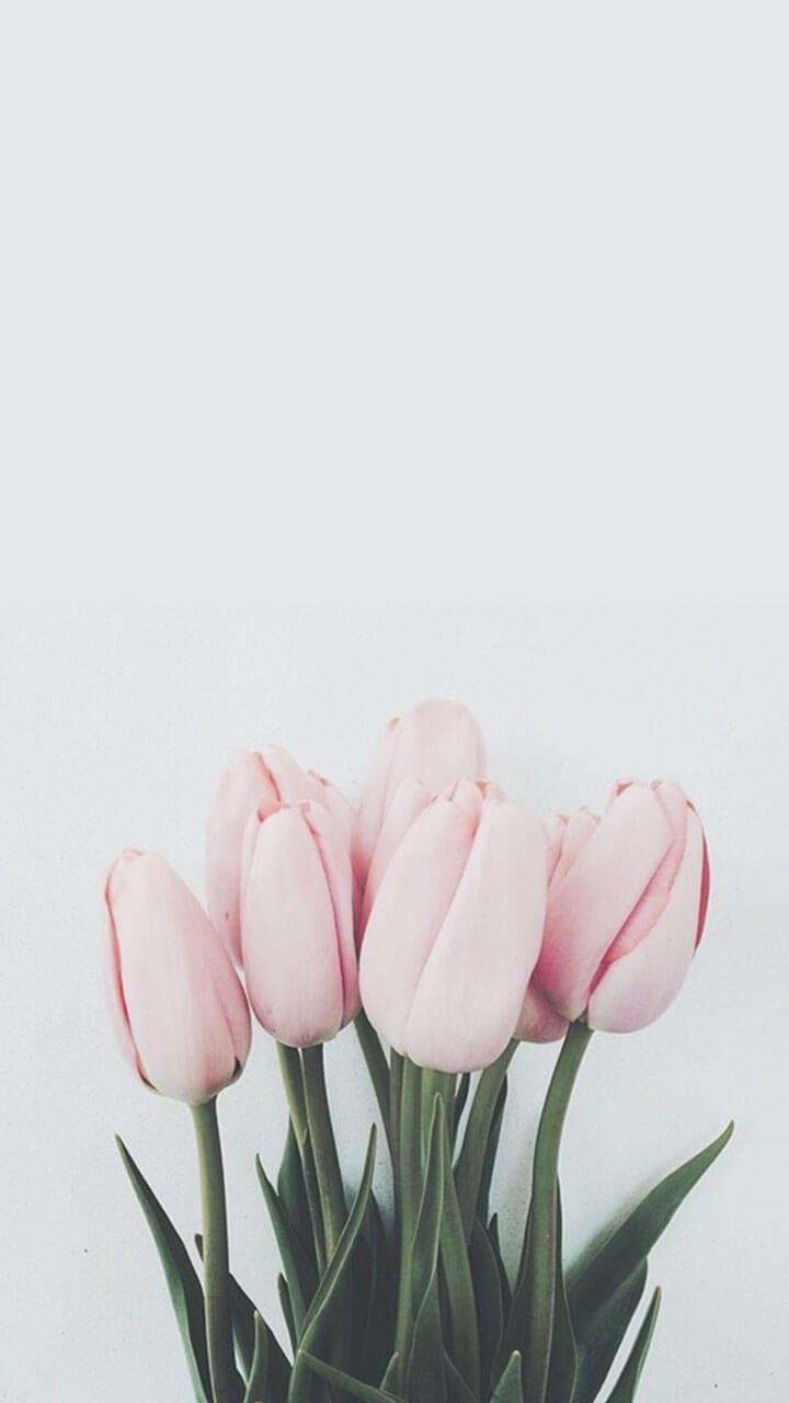 Pin De Angie Paola Garavito En Flower Fondos De Pantalla Tulipanes Tulipanes De Color Rosa Flor Estética