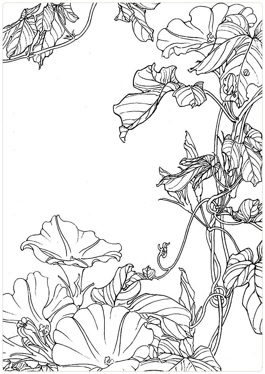 Цветок контурный рисунок