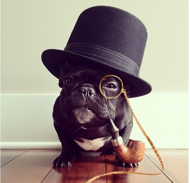 56a3d54a Dog with Monocle. Quite. - Imgur French Bulldog, French Bulldog Shedding,  French