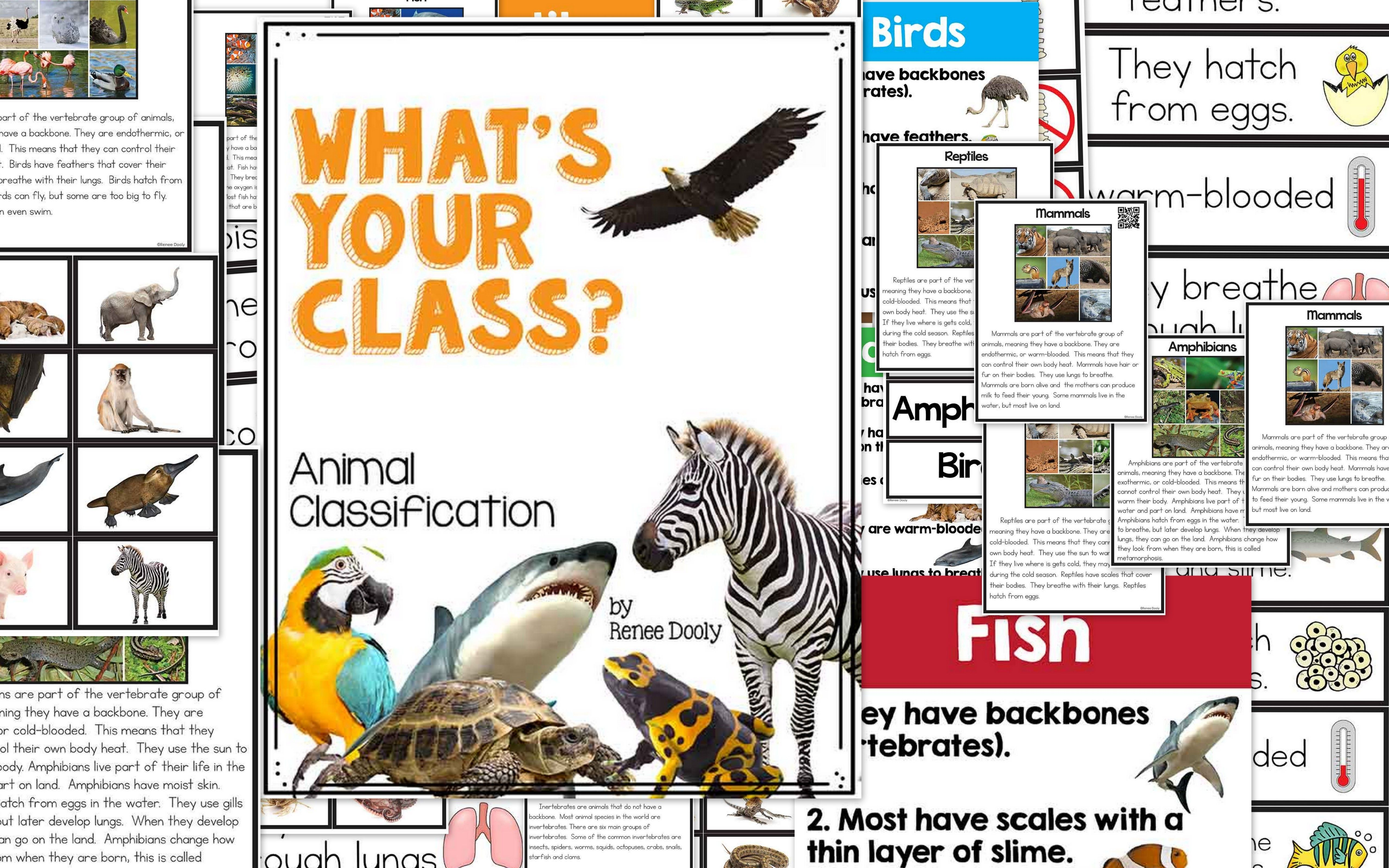 What S Your Class Animal Classification