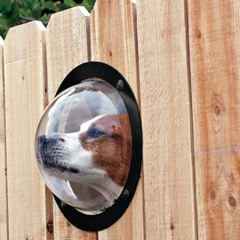 All dogs need one of these in their back yard fence.  Drives them mad not being able to see who is passing. It will save you the trouble of chewed up fences.
