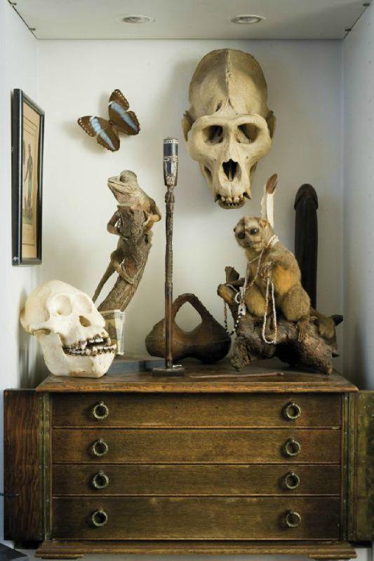 les nouveaux cabinets de curiosité michel reuss | étrange