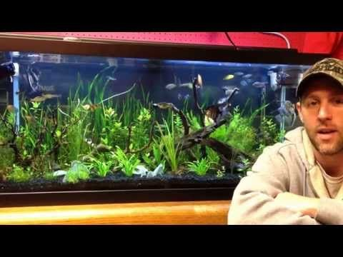 How To Keep Crystal Clear Water In Your Aquarium Aquarium Fish Tank Freshwater Aquarium