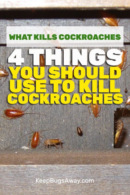 What Kills Cockroaches Instantly | Pest Control | How to