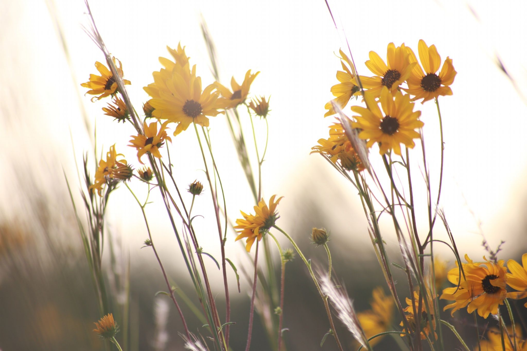 Love these yellow flowers but... by Sonya Jones on 500px